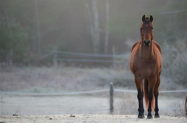 Paard winter 640x423 - Algemene voedingstips