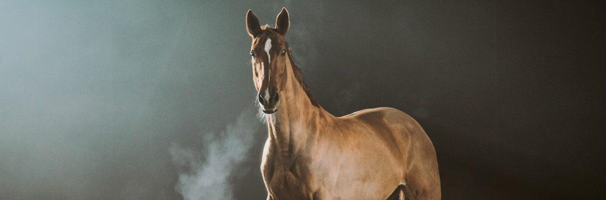paard hoesten 1210x400 - Algemene voedingstips